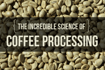 Coffee processing