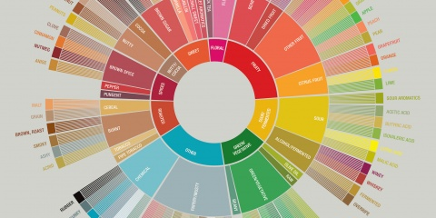 Coffee Flavor Wheel