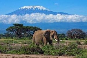 Tanzanian Coffee Mt Kilimanjaro
